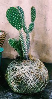 kokedama, bola de musgo con planta