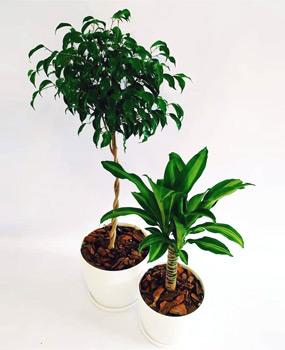 """venta de plantas, tienda online, """"plantamadre"""" Rosario"""